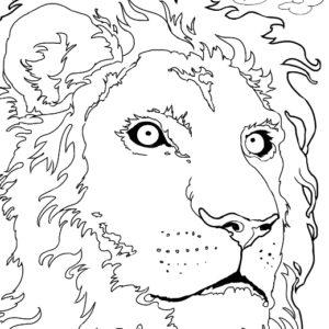 Dave OConnell, Lion, Line art